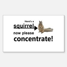 Concentrate on the squirrel Decal