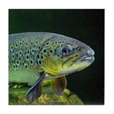 BROWN TROUT Tile Coaster