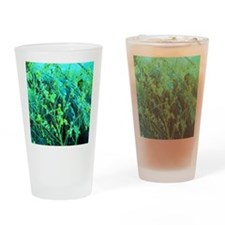 MNLandscape10 Drinking Glass