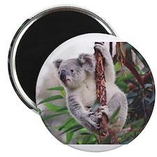 Cute Marsupials Magnet