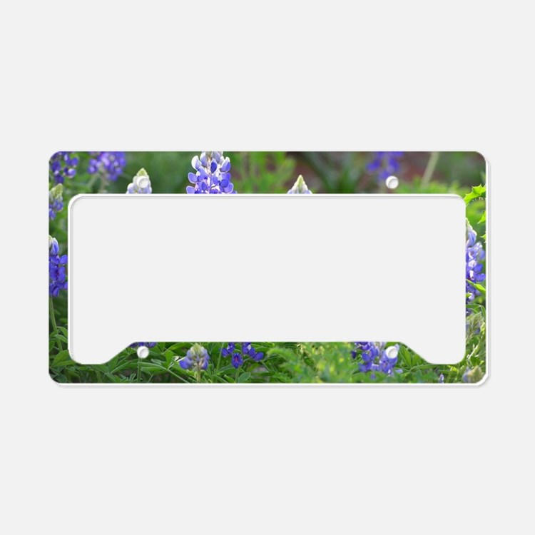 Cute Bluebonnets License Plate Holder