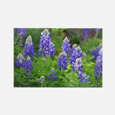 Cool Bluebonnet Rectangle Magnet