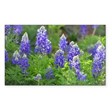 Cute Texas bluebonnet Decal