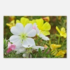 Primrose Postcards (Package of 8)