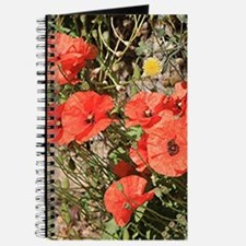 Poppies growing on El Camino, Spain Journal