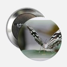 """Rice Paper Butterfly 2.25"""" Button (10 pack)"""