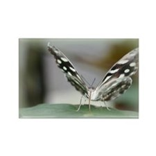 Rice Paper Butterfly Rectangle Magnet (10 pack)