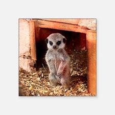 "Baby Meerkat Square Sticker 3"" x 3"""