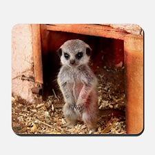 Baby Meerkat Mousepad