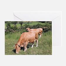 Cows in field on El Camino, Spain Greeting Card