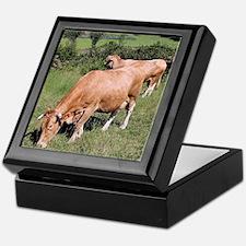 Cows in field on El Camino, Spain Keepsake Box
