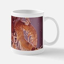 A Handful of Shrimp Mugs