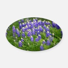 Bluebonnets Everywhere Oval Car Magnet