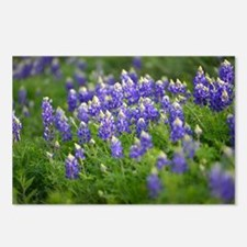 Bluebonnets Everywhere Postcards (Package of 8)