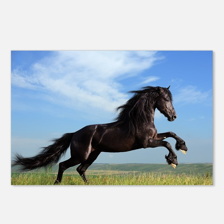 Black Horse Running Postcards (Package of 8)