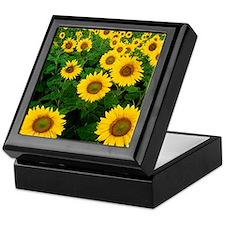 Field of Sunflowers Keepsake Box