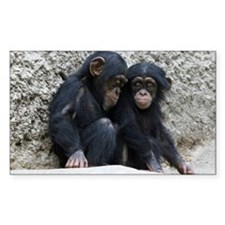 Chimpanzee002 Decal