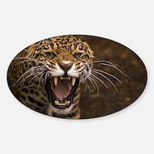 Growling Jaguar Decal