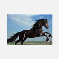 Black Horse Running Magnets