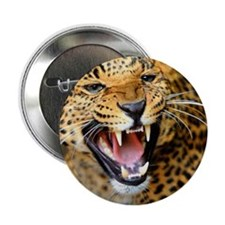 "Growling Leopard 2.25"" Button (10 pack)"