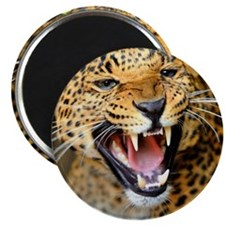 Growling Leopard Magnets