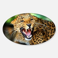 Growling Leopard Decal