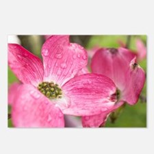 Rainy Spring Postcards (Package of 8)