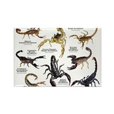 Cute Scorpion Rectangle Magnet (10 pack)