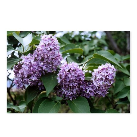 Lilacs Postcards (Package of 8)