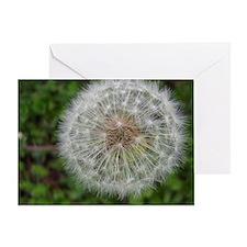 Dandelion Head Greeting Cards