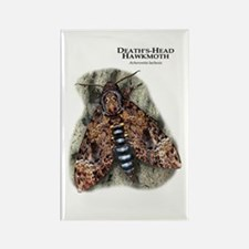 Death's Head Hawkmoth Rectangle Magnet