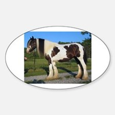 horse gypsy vanner Decal