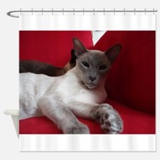 siamese laying Shower Curtain