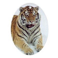 Siberian Tiger Oval Ornament