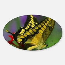 YELLOW BUTTERFLY Oval Decal