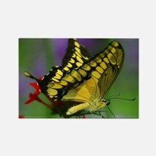YELLOW BUTTERFLY Rectangle Magnet