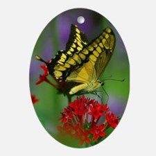 YELLOW BUTTERFLY Oval Ornament
