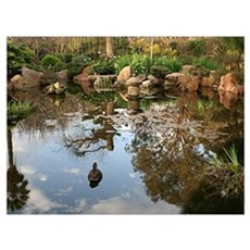 Himeji Japanese garden pond with duck Poster