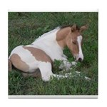 Sleeping foal Tile Coaster