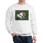 Sleeping foal Sweatshirt