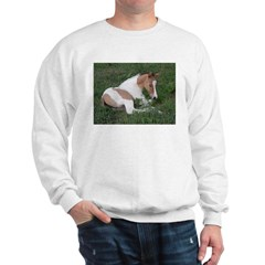 Sleeping foal Sweatshirt