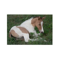 Sleeping foal Rectangle Magnet (100 pack)