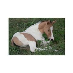 Sleeping foal Rectangle Magnet