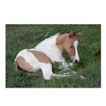Sleeping foal Postcards (Package of 8)