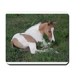 Sleeping foal Mousepad