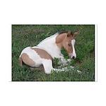 Sleeping foal Mini Poster Print