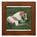 Sleeping foal Framed Tile