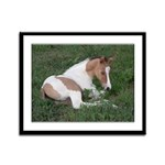 Sleeping foal Framed Panel Print