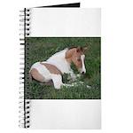 Sleeping foal Journal