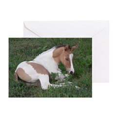 Sleeping foal Greeting Cards (Pk of 10)